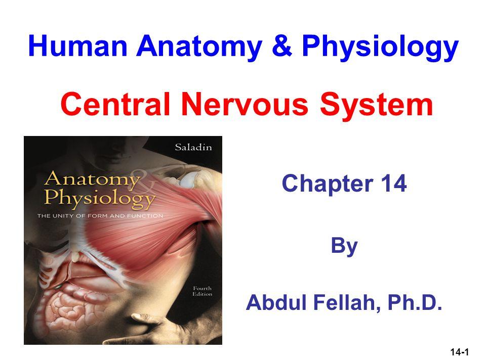 Tolle Chapter 14 Anatomy And Physiology Test Bilder - Menschliche ...