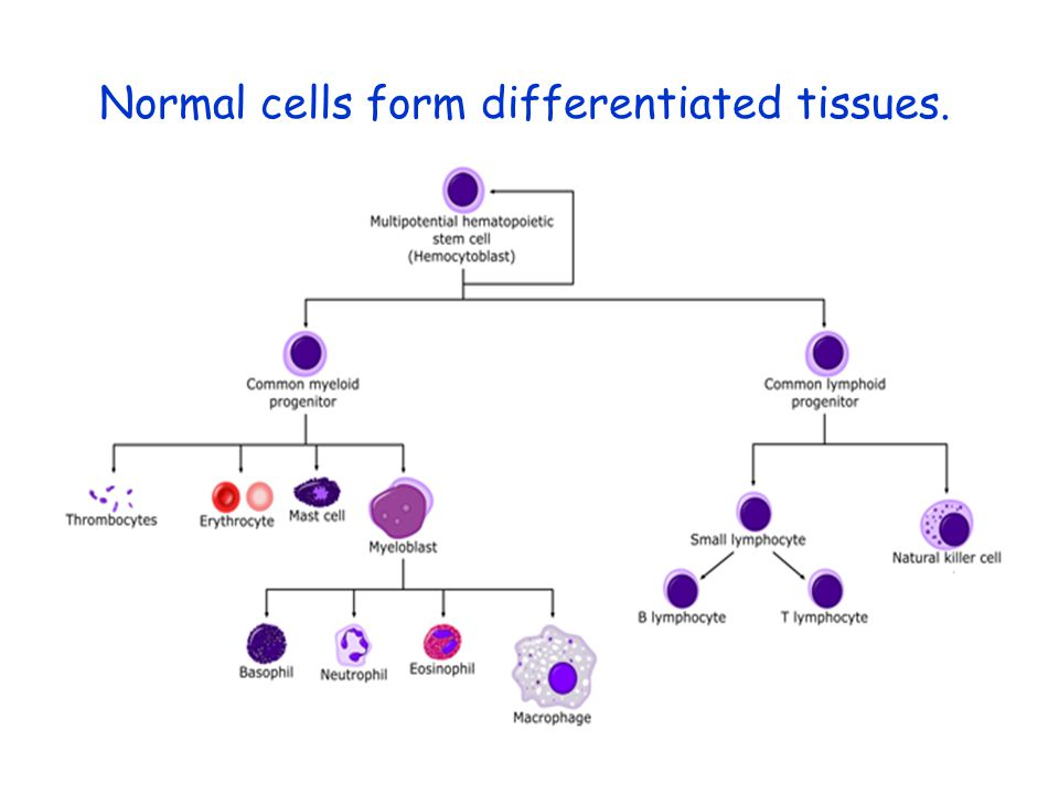Normal cells form differentiated tissues.