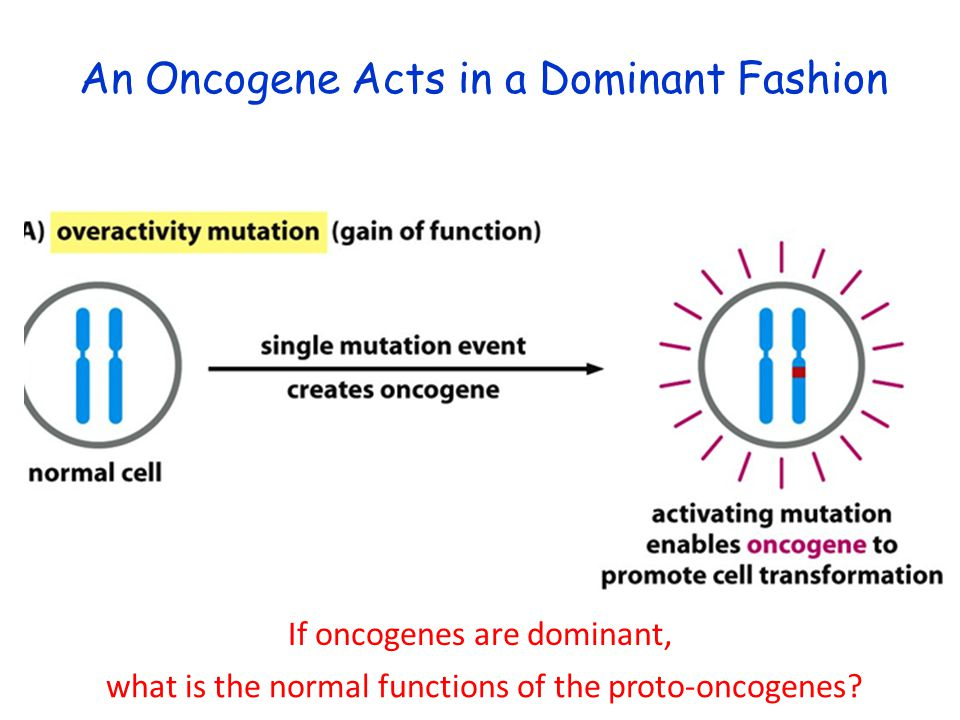 An Oncogene Acts in a Dominant Fashion