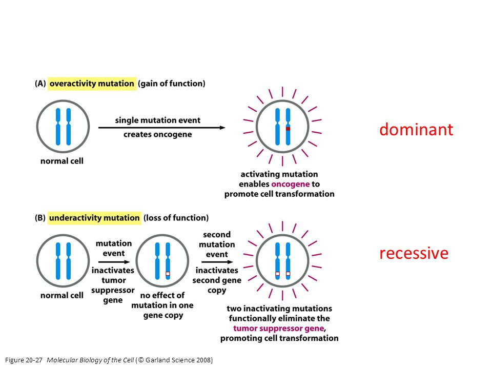 dominant recessive Figure Molecular Biology of the Cell (© Garland Science 2008)