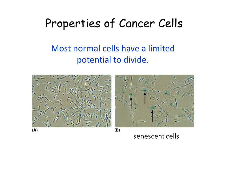 Most normal cells have a limited potential to divide.