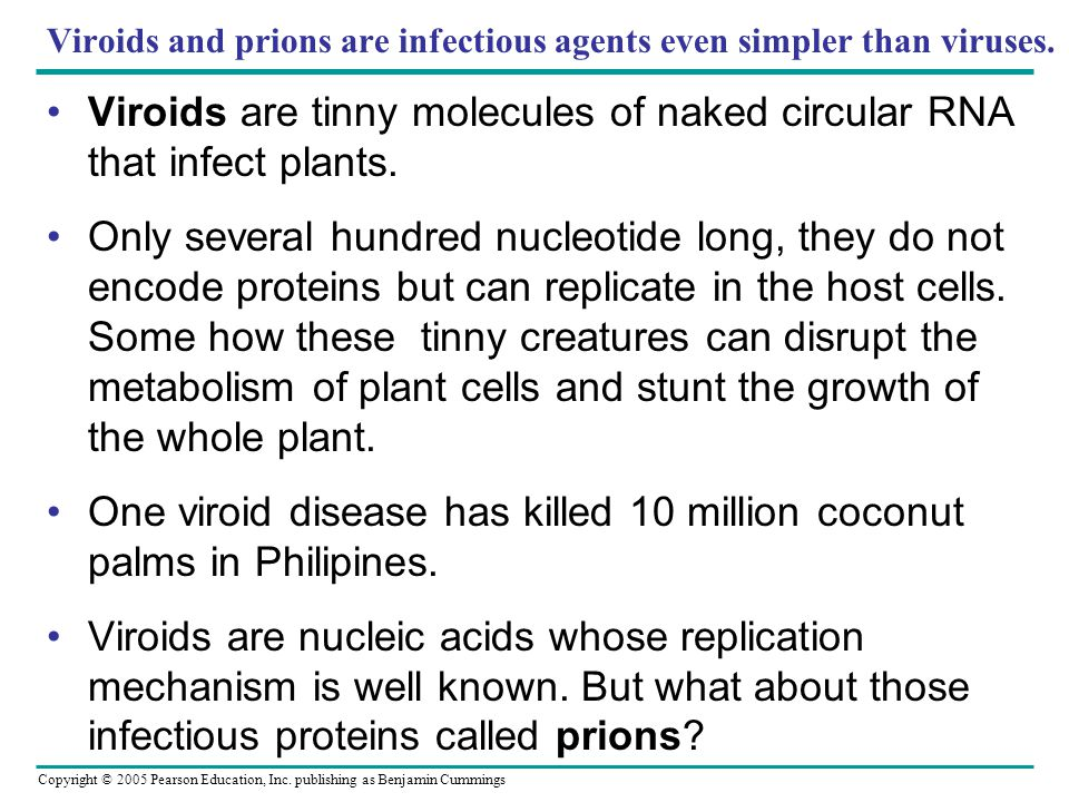 viroids and prions Learning objectives describe viroids and their unique characteristics describe virusoids and their unique characteristics describe prions and their unique characteristics.