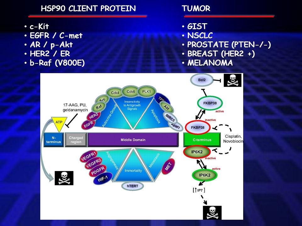 HSP90 CLIENT PROTEIN c-Kit. EGFR / C-met. AR / p-Akt. HER2 / ER. b-Raf (V800E) TUMOR. GIST. NSCLC.