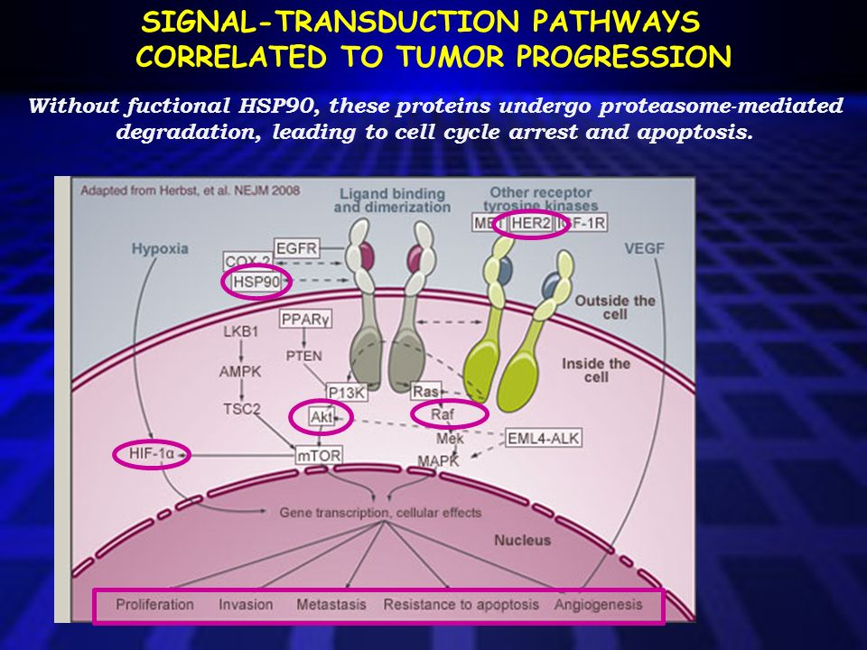 SIGNAL-TRANSDUCTION PATHWAYS CORRELATED TO TUMOR PROGRESSION