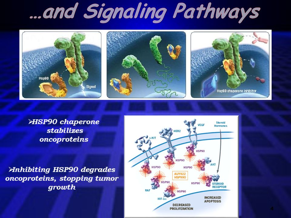…and Signaling Pathways