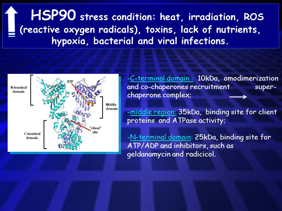 HSP90 stress condition: heat, irradiation, ROS (reactive oxygen radicals), toxins, lack of nutrients, hypoxia, bacterial and viral infections.