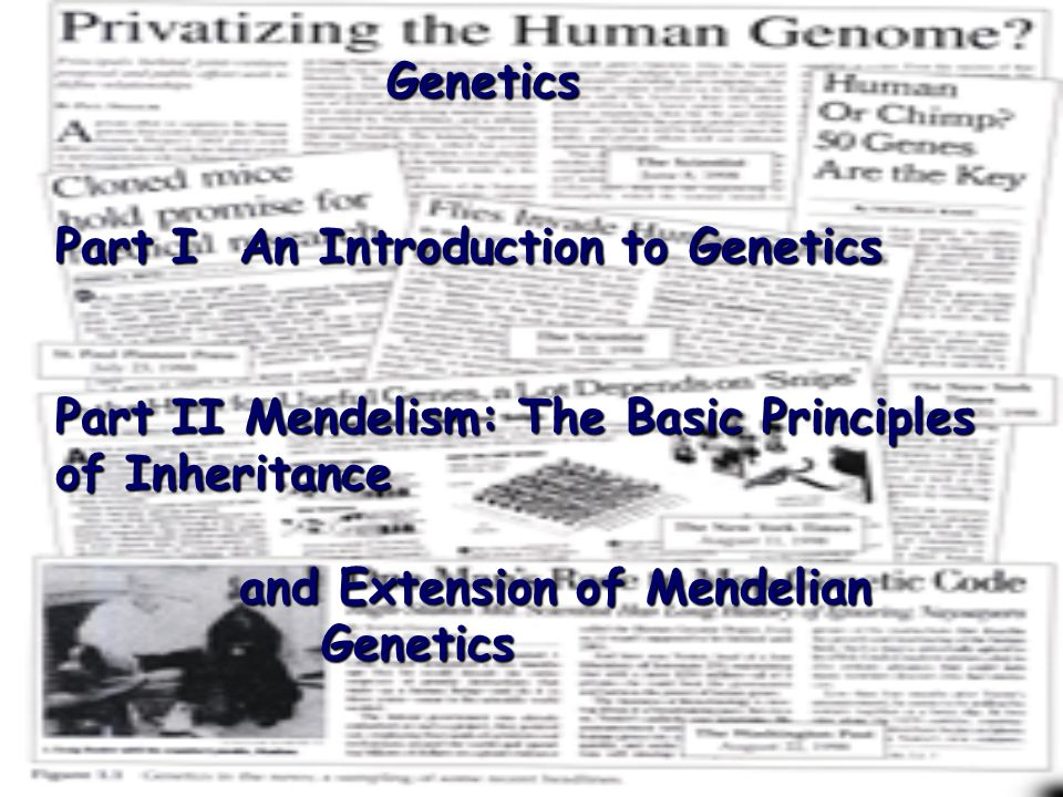 an introduction to dna Dna introduction dna dna the human organism is controlled by a code that  we call dna, which is short for deoxyribonucleic acid.