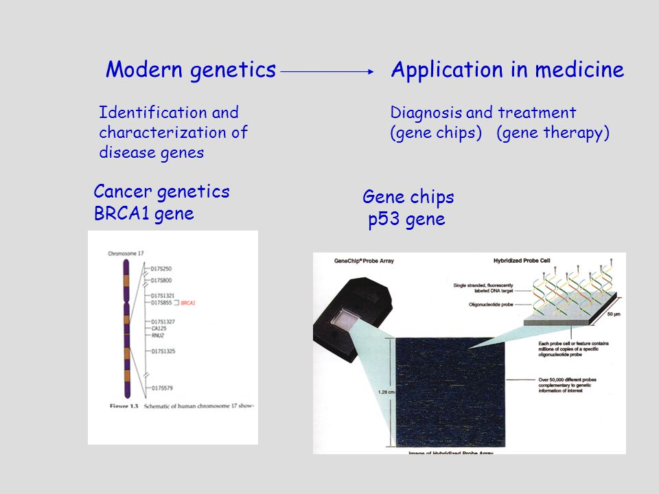 genetics part i an introduction to genetics ppt