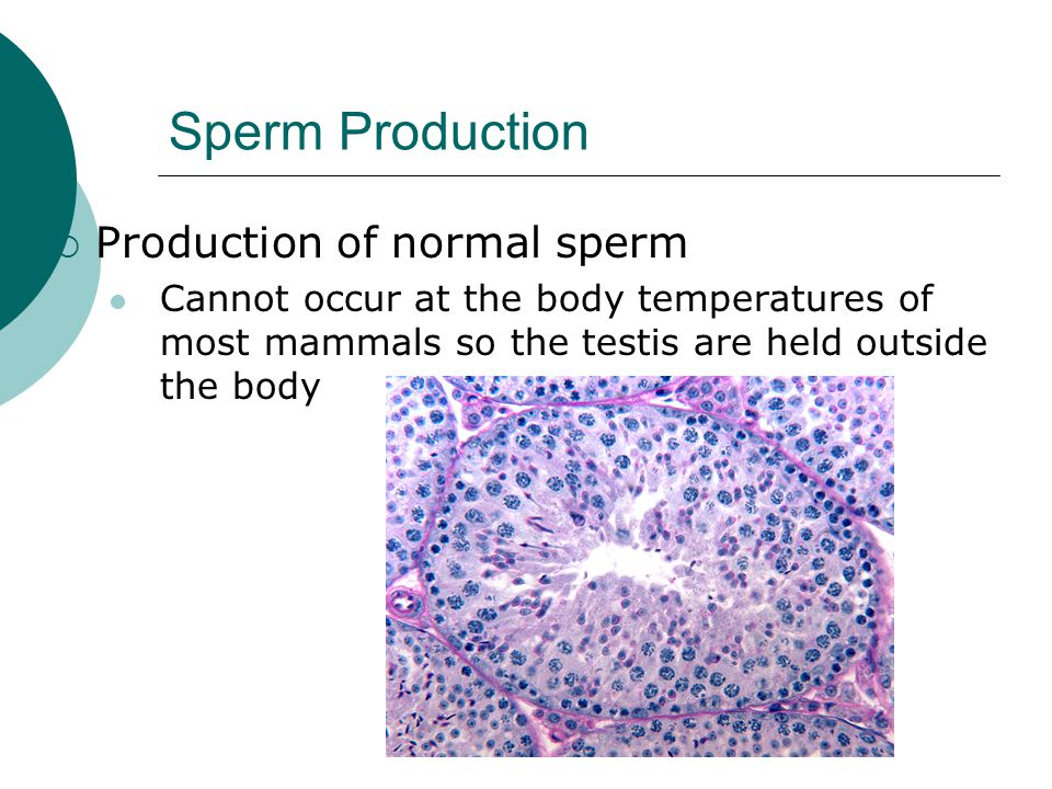 Another side how long for sperm production little slut