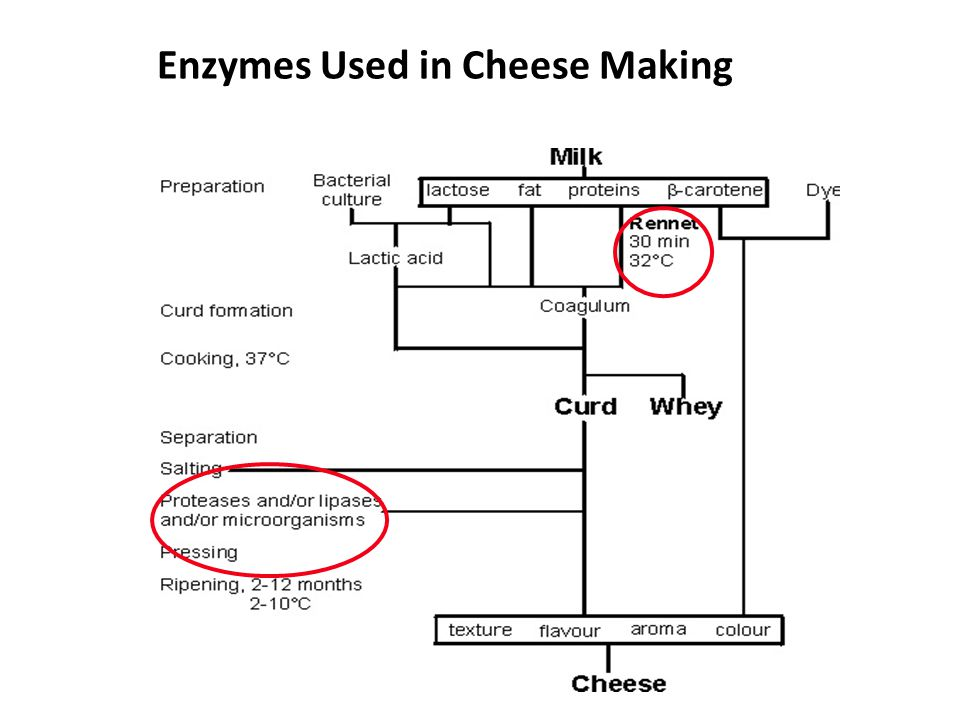 enzymes in cheese
