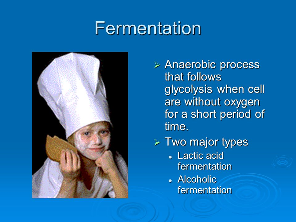 Fermentation Anaerobic process that follows glycolysis when cell are without oxygen for a short period of time.