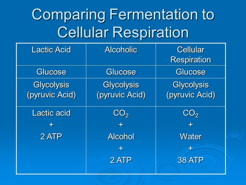 Comparing Fermentation to Cellular Respiration
