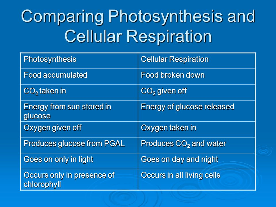 Comparing Photosynthesis and Cellular Respiration