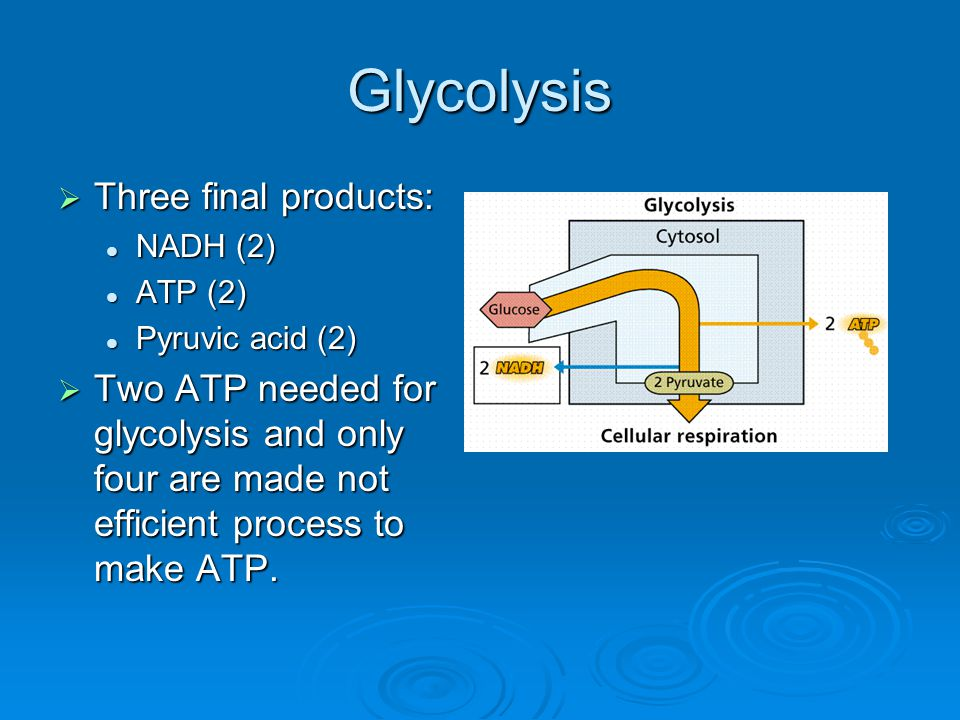 Glycolysis Three final products: