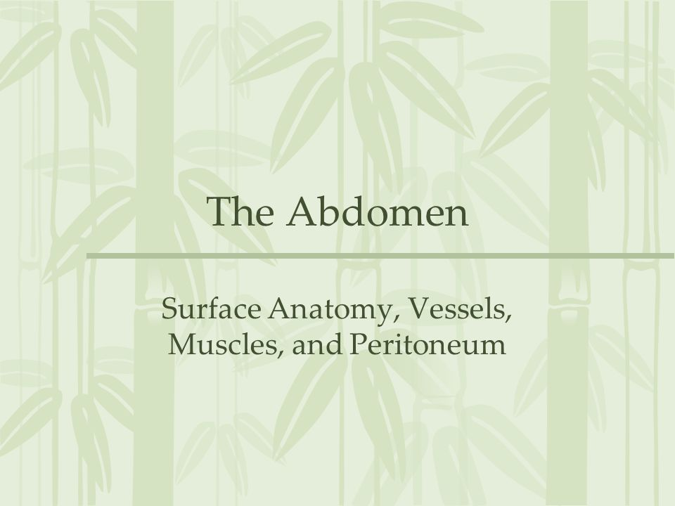 Surface Anatomy, Vessels, Muscles, and Peritoneum