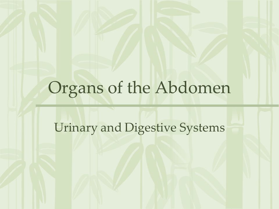 Urinary and Digestive Systems