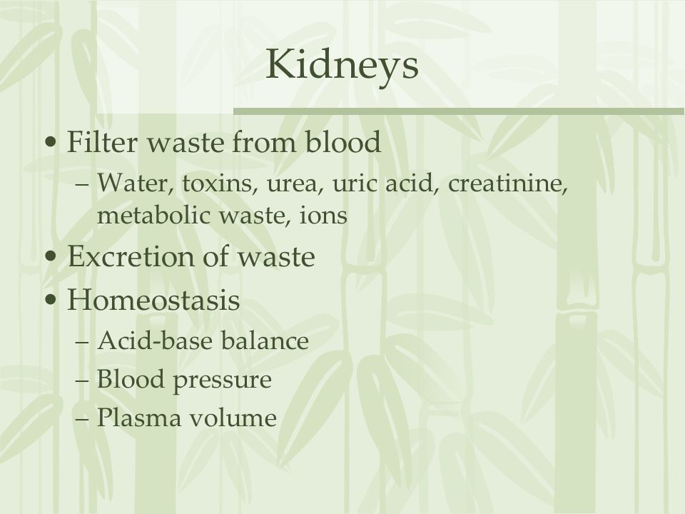 Kidneys Filter waste from blood Excretion of waste Homeostasis