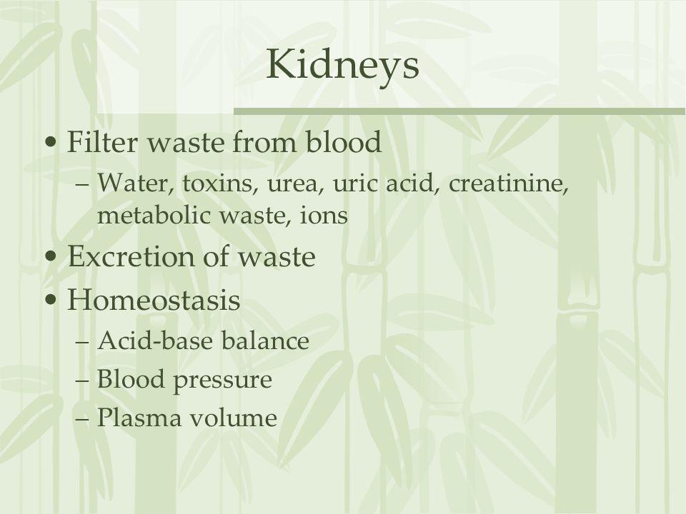 Kidneys Filter waste from blood Excretion of waste Homeostasis