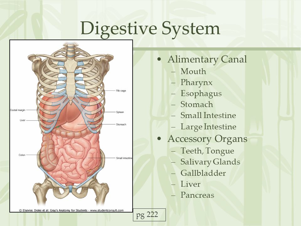 Digestive System Alimentary Canal Accessory Organs Mouth Pharynx