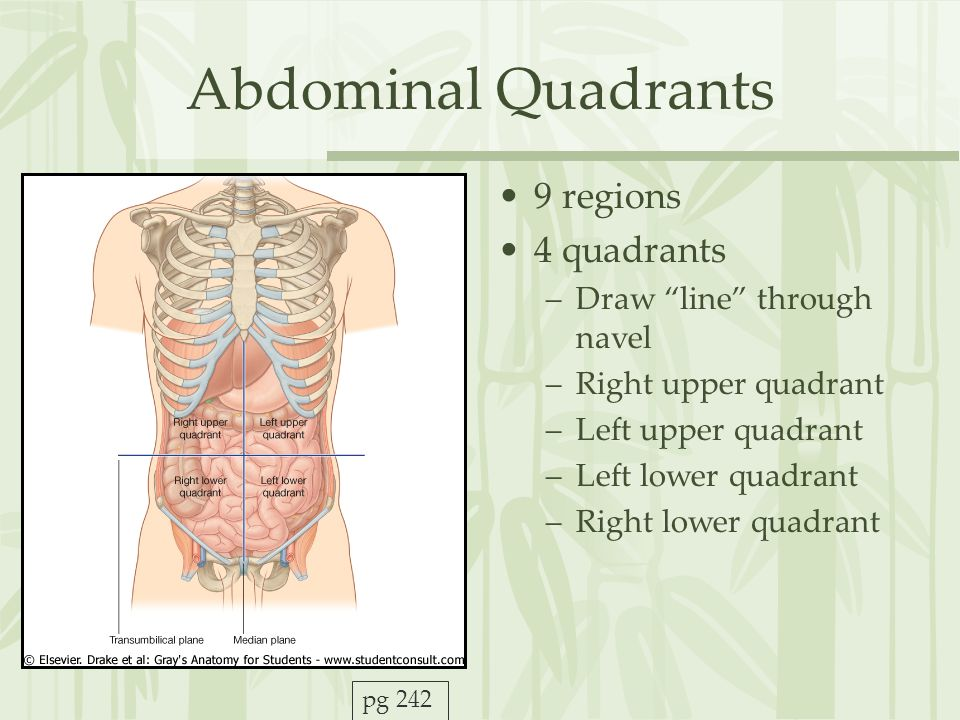 Abdominal Quadrants 9 regions 4 quadrants Draw line through navel