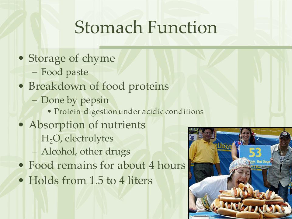 Stomach Function Storage of chyme Breakdown of food proteins