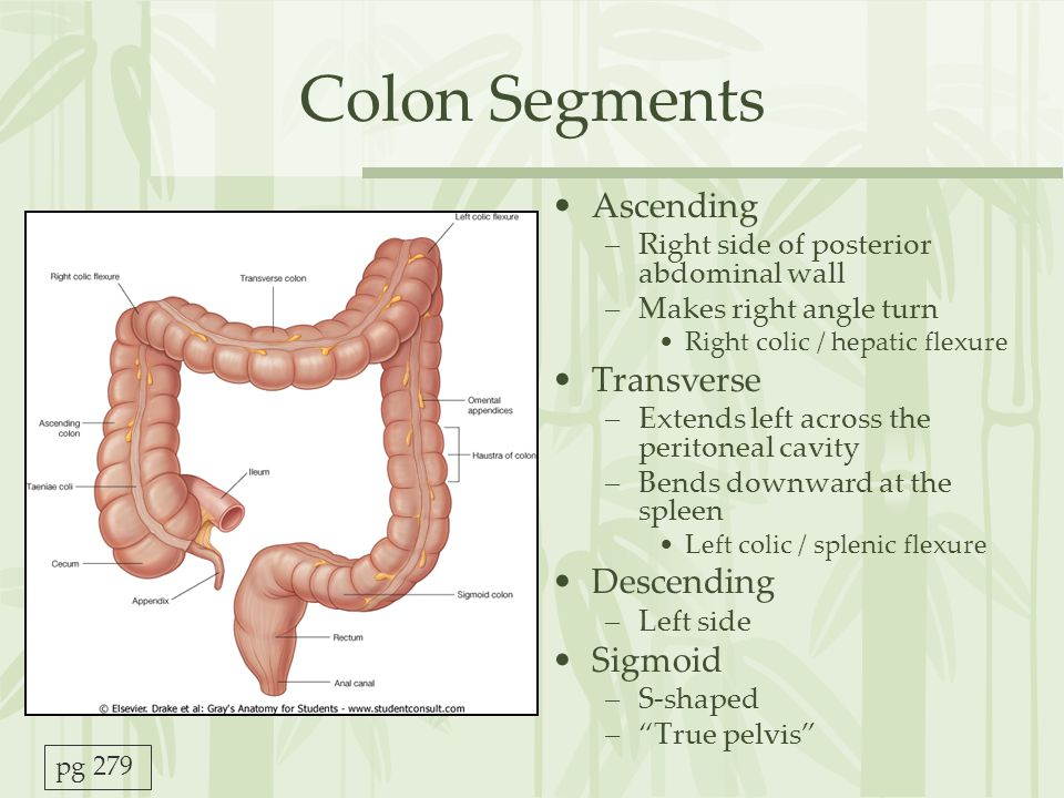 Colon Segments Ascending Transverse Descending Sigmoid