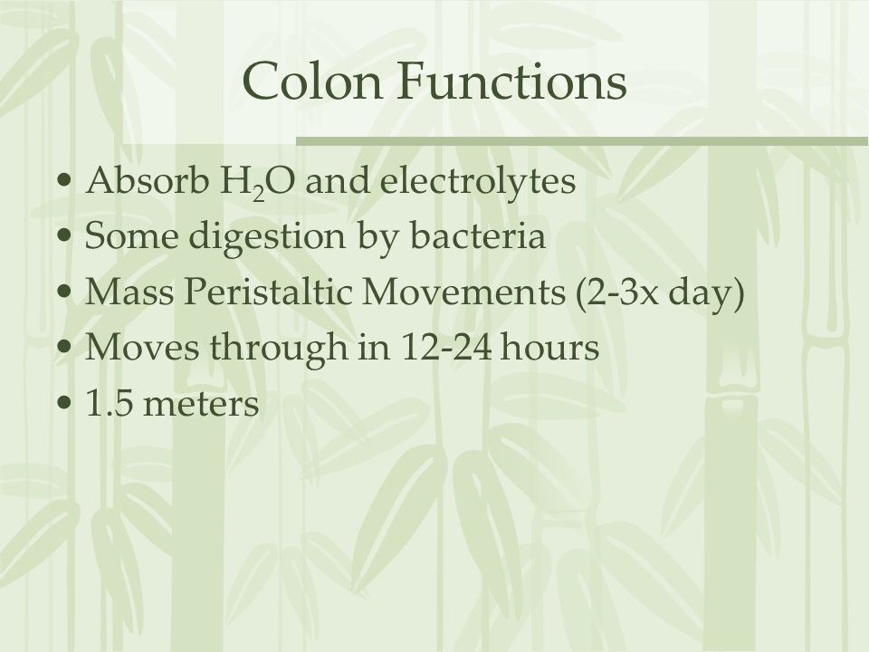 Colon Functions Absorb H2O and electrolytes Some digestion by bacteria