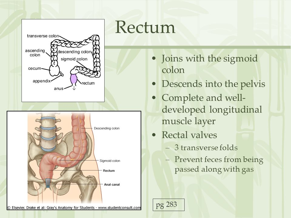 Rectum Joins with the sigmoid colon Descends into the pelvis