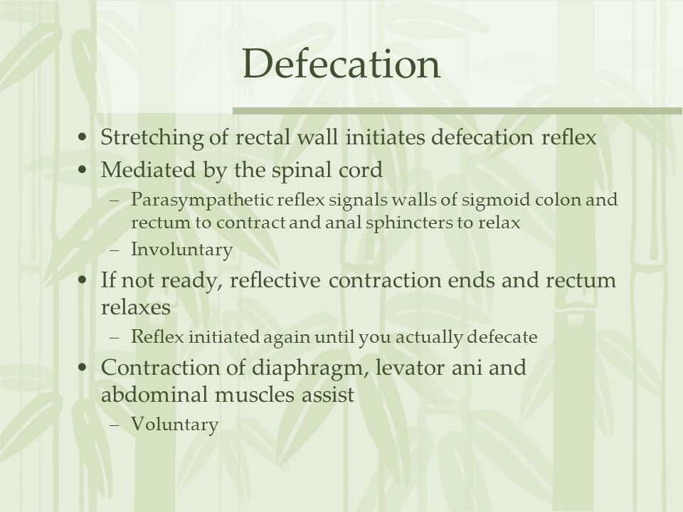 Defecation Stretching of rectal wall initiates defecation reflex
