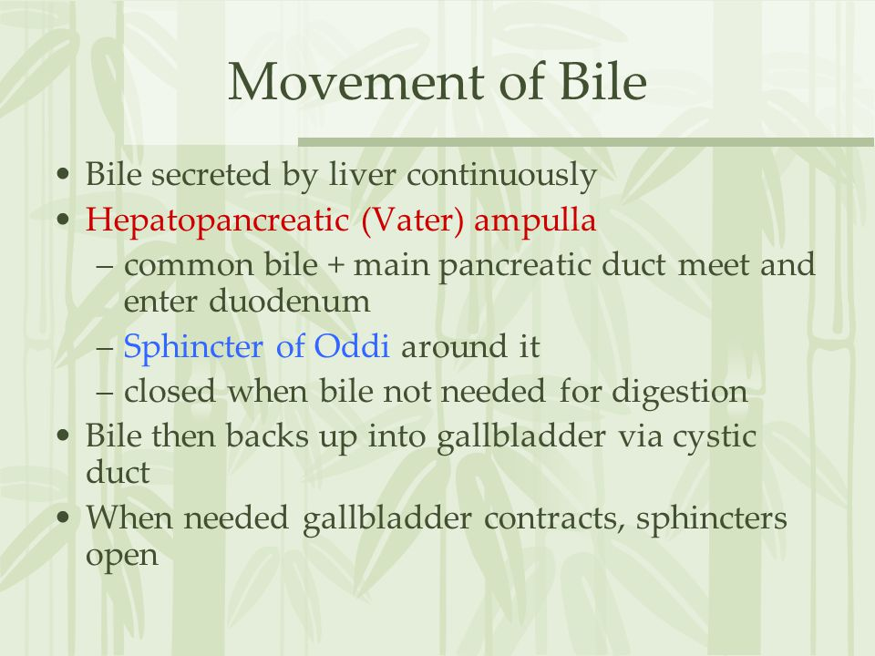 Movement of Bile Bile secreted by liver continuously