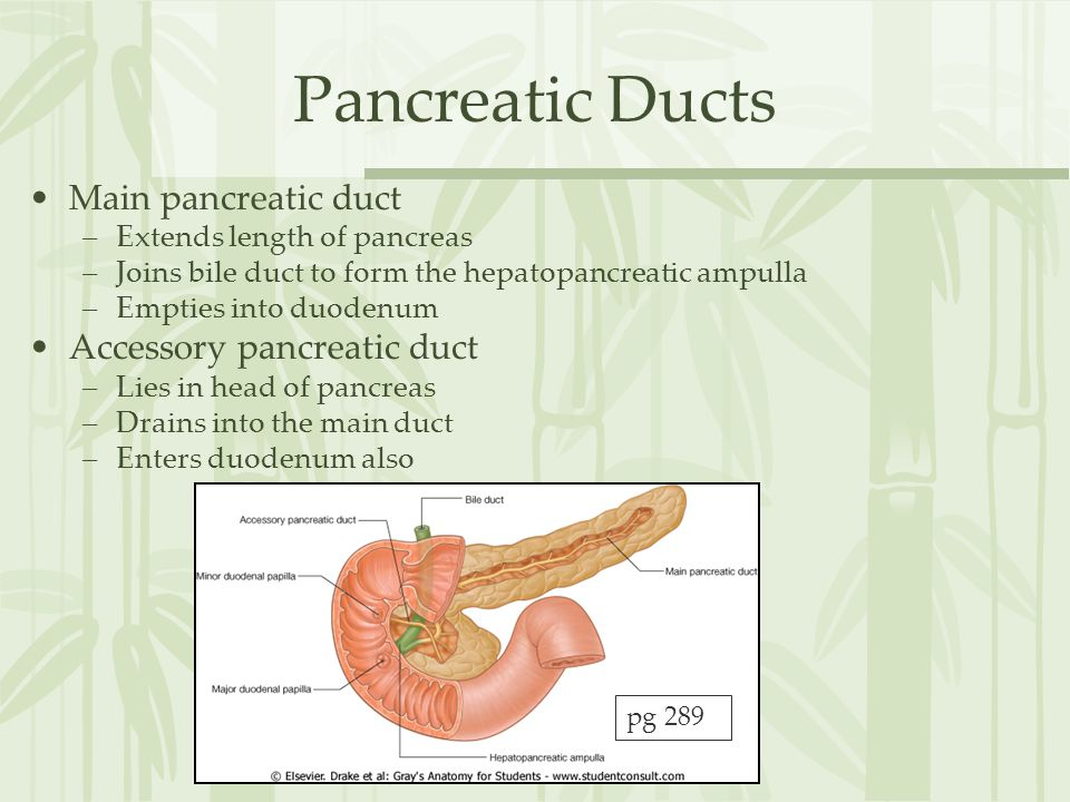 Pancreatic Ducts Main pancreatic duct Accessory pancreatic duct