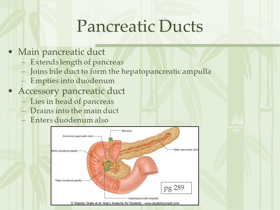 Pancreatic Ducts Main pancreatic duct Accessory pancreatic duct
