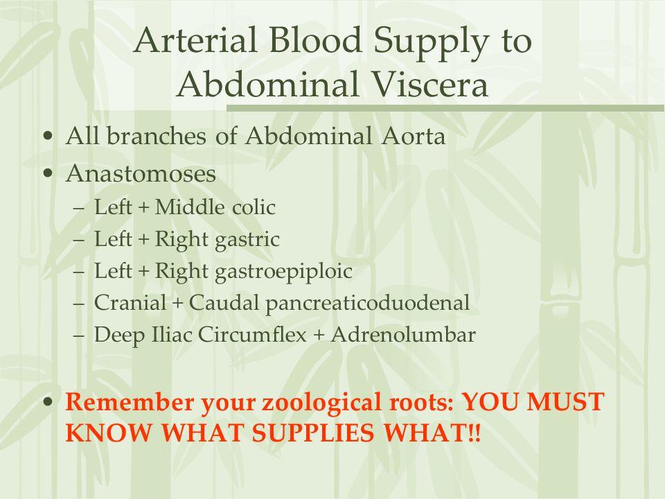 Arterial Blood Supply to Abdominal Viscera