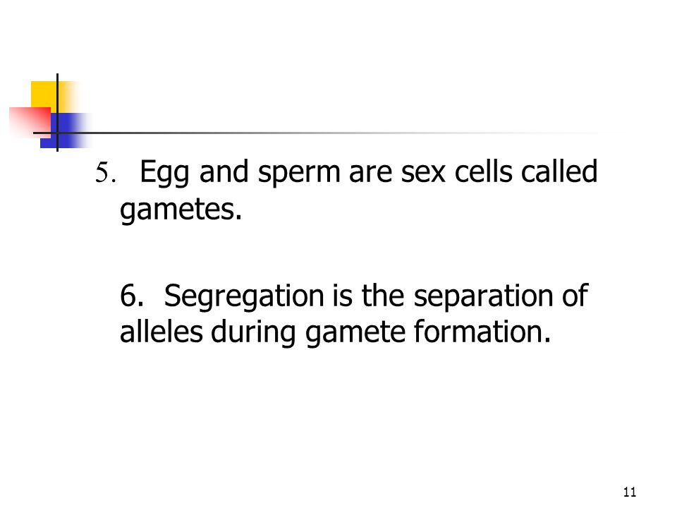 5. Egg and sperm are sex cells called gametes.