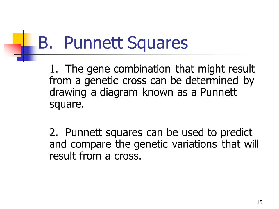 B. Punnett Squares 1. The gene combination that might result from a genetic cross can be determined by drawing a diagram known as a Punnett square.