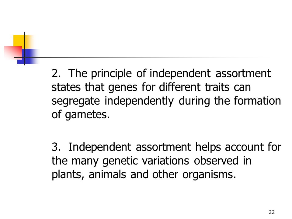 2. The principle of independent assortment states that genes for different traits can segregate independently during the formation of gametes.