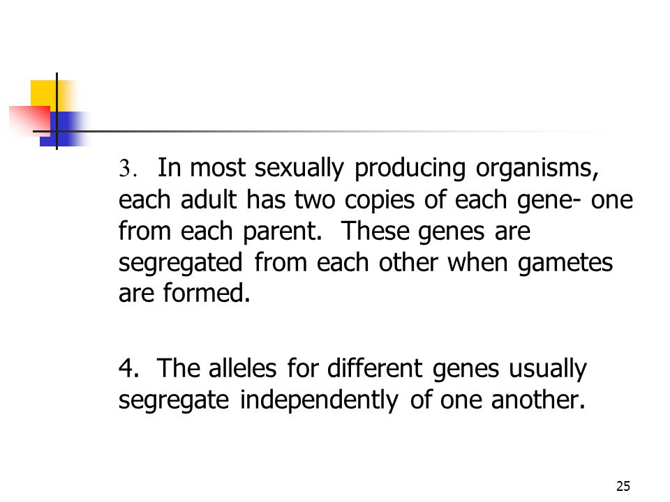 3. In most sexually producing organisms, each adult has two copies of each gene- one from each parent. These genes are segregated from each other when gametes are formed.