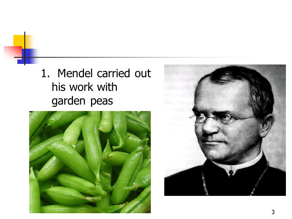 1. Mendel carried out his work with garden peas