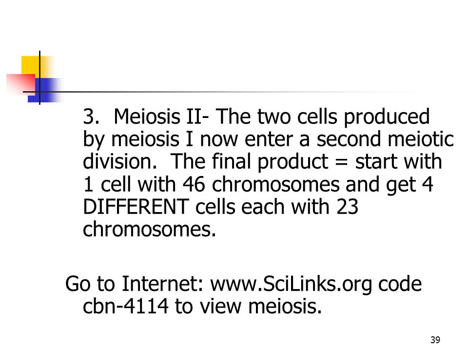 3. Meiosis II- The two cells produced by meiosis I now enter a second meiotic division. The final product = start with 1 cell with 46 chromosomes and get 4 DIFFERENT cells each with 23 chromosomes.
