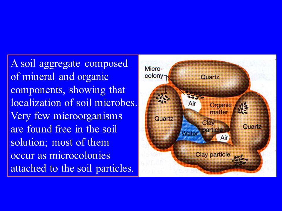 Chapter 9 microbial ecology ppt video online download for What is dirt composed of