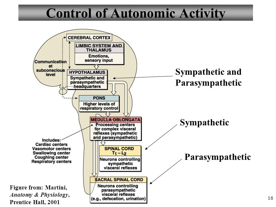 how to remember sympathetic and parasympathetic