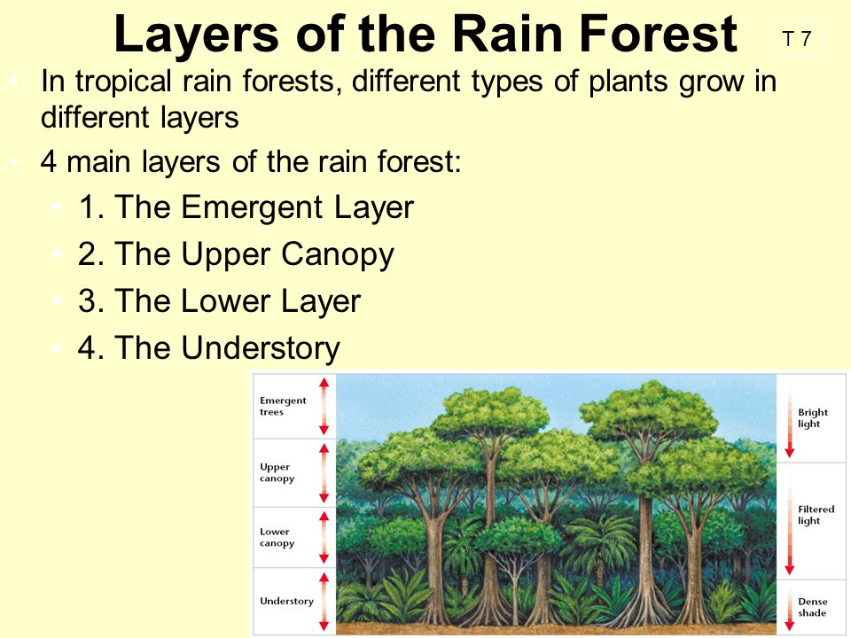 different types of tropical rain forest