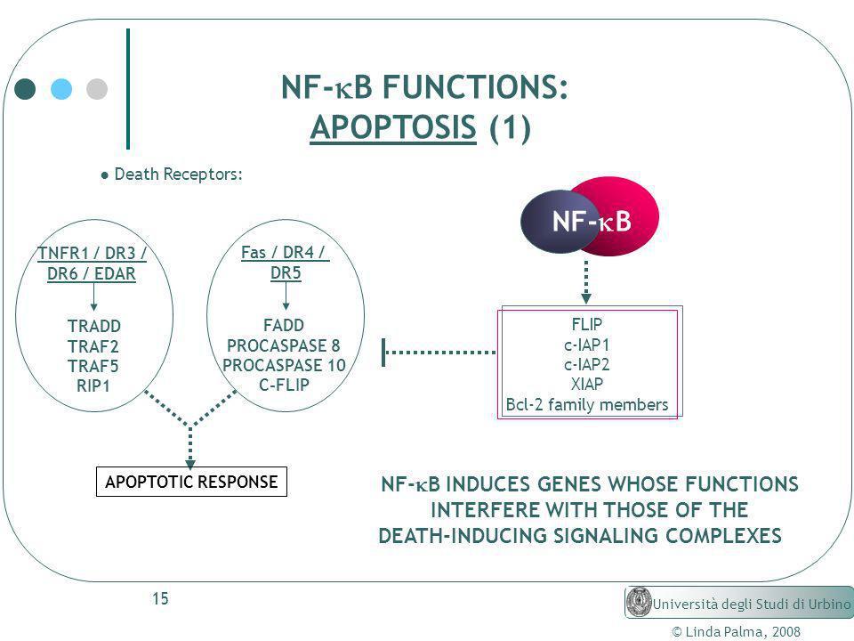 NF-kB FUNCTIONS: APOPTOSIS (1) NF-kB