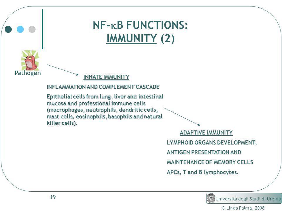 NF-kB FUNCTIONS: IMMUNITY (2) Pathogen INNATE IMMUNITY