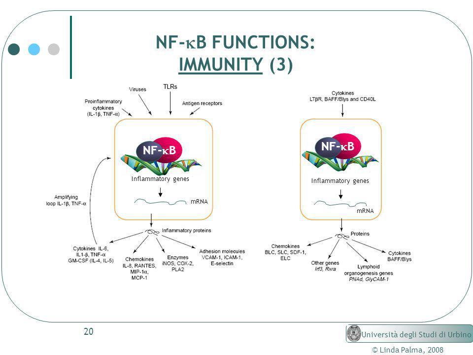 NF-kB FUNCTIONS: IMMUNITY (3) NF-kB Università degli Studi di Urbino