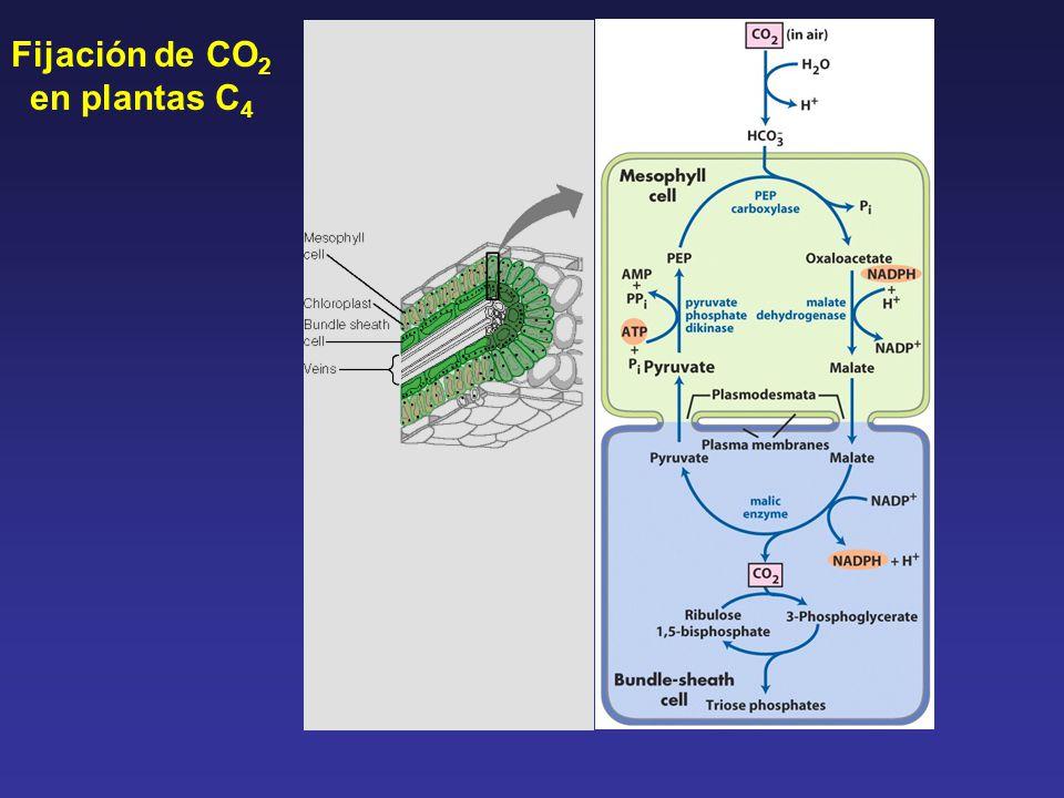 filetype pdf fotosintesis humana