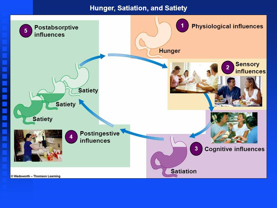 Hunger, Satiation, and Satiety