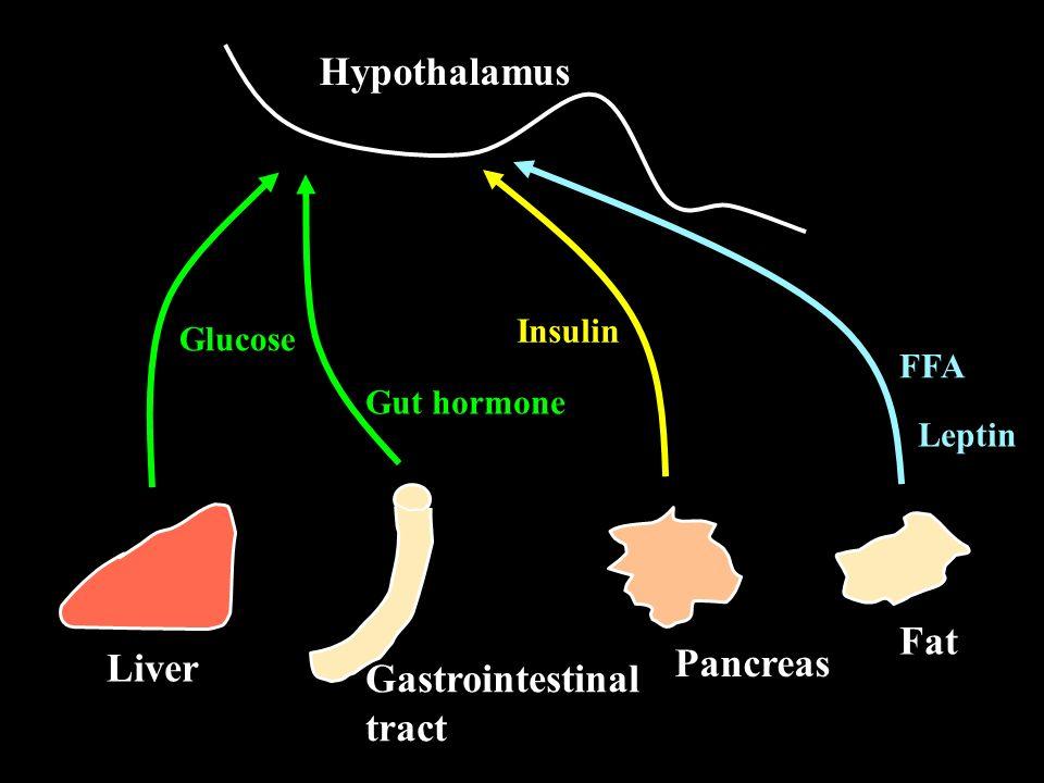 Gastrointestinal tract Hypothalamus