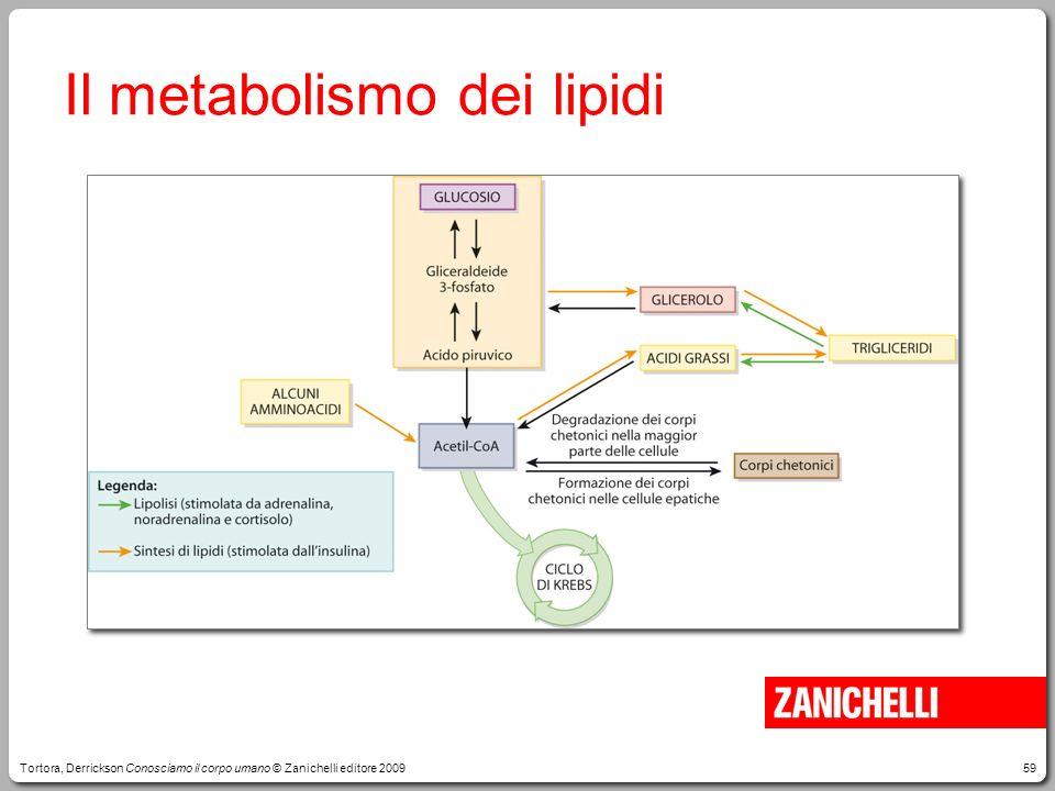 Il metabolismo dei lipidi