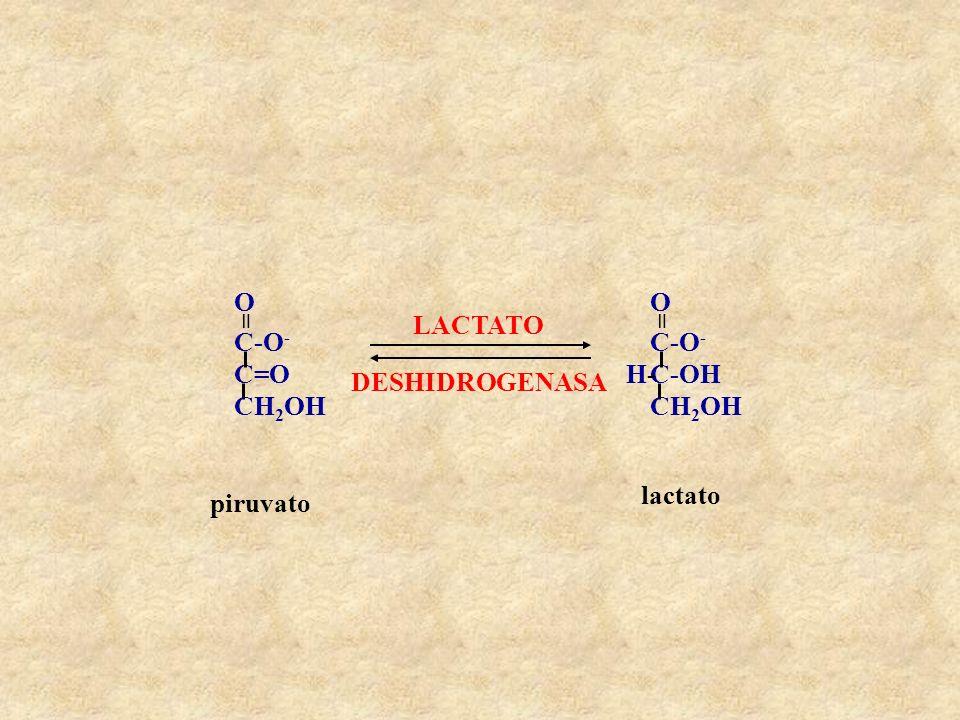 C=O CH2OH C-O- = O LACTATO DESHIDROGENASA C-OH H- lactato piruvato